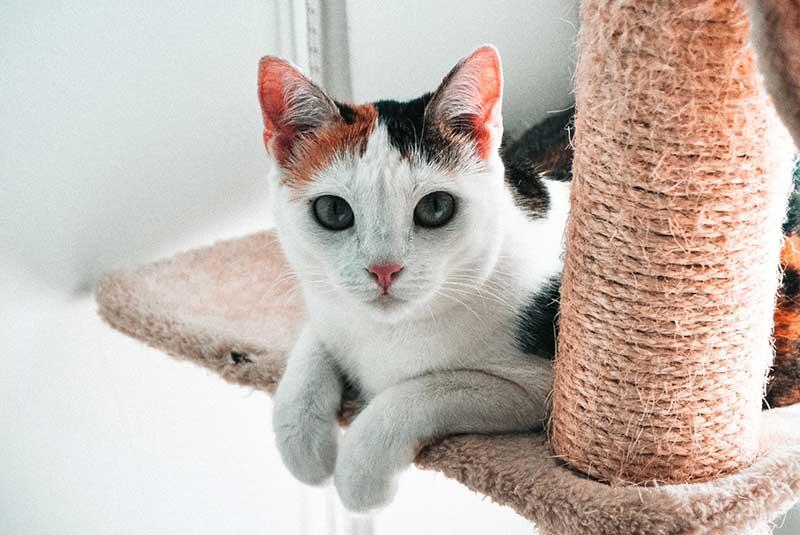 Cat at Tanglewood Animal Hospital