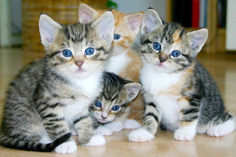 Cute kittens at Tanglewood Animal Hospital in Houston